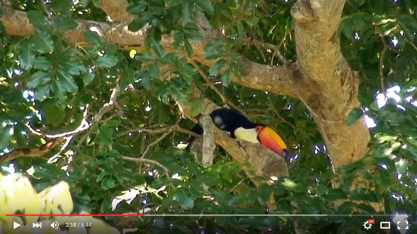 video-pantanal-america-do-sul